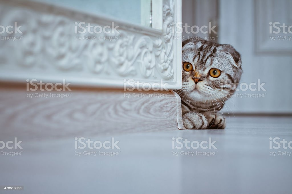 Curious Cat looking around the corner of a wall stock photo