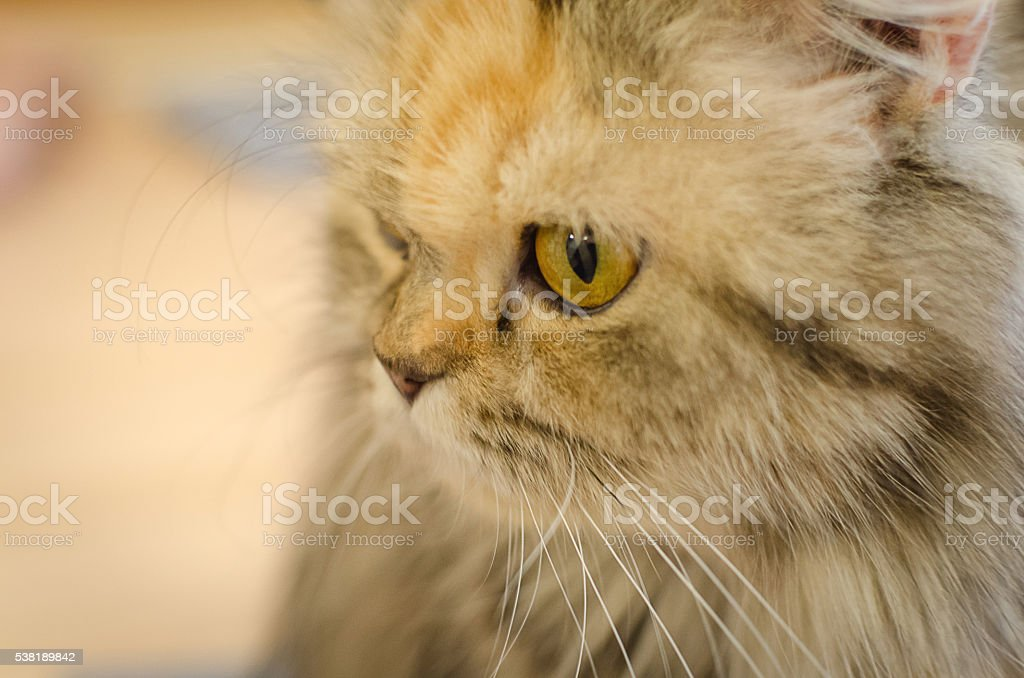 Curious cat stock photo