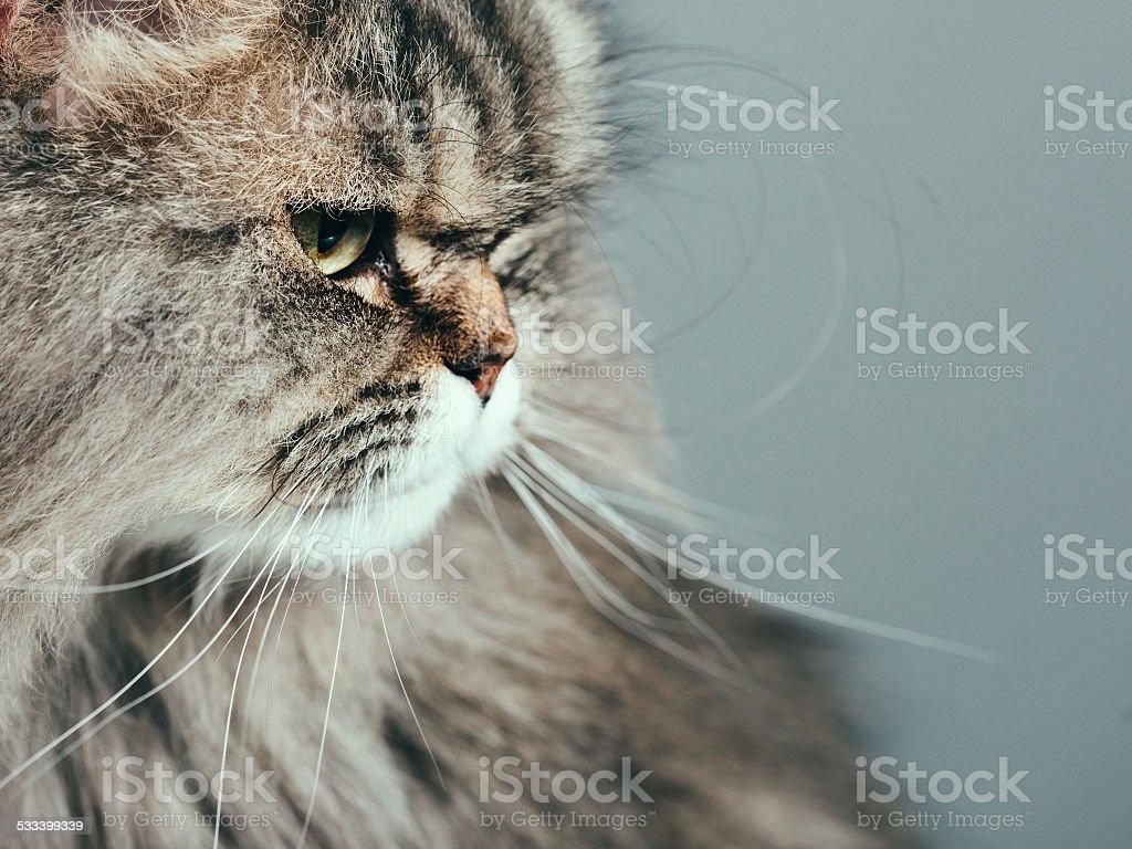 Curious cat portrait stock photo