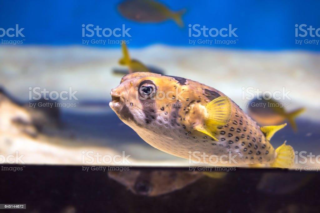 Curious dog fish in Moscow aquarium stock photo