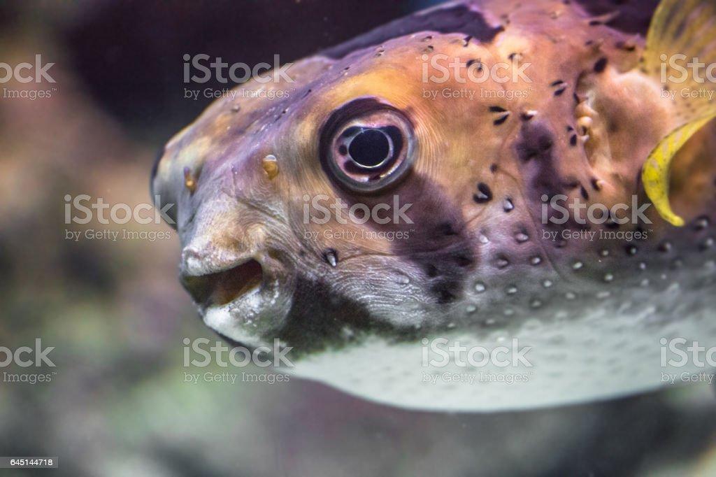 Curious dog fish portrait in Moscow aquarium stock photo