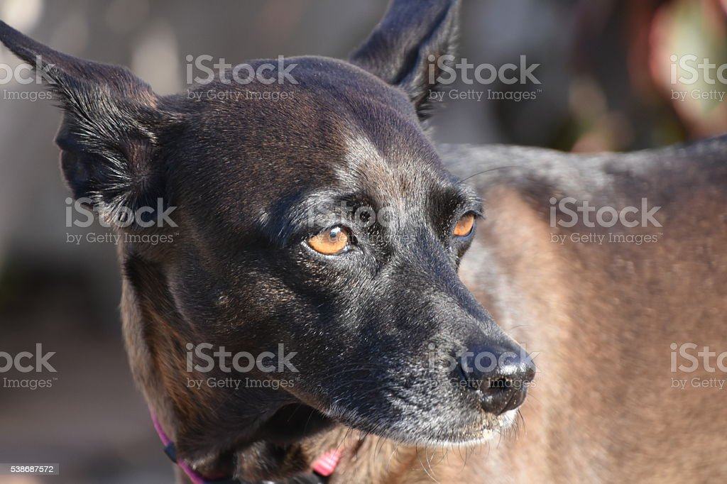 Curious dog looking back stock photo