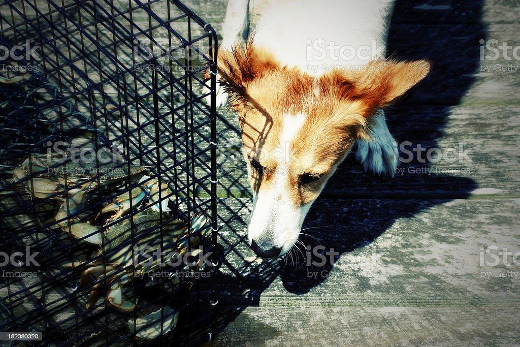 Curious Dog near crab pots Stylized stock photo