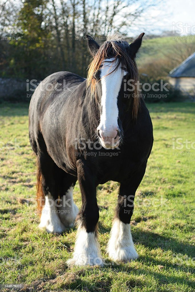 Curious horse in a rural setting stock photo