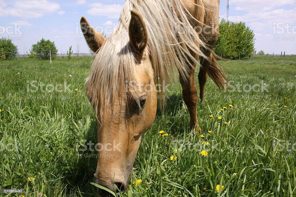 Curious horse stock photo