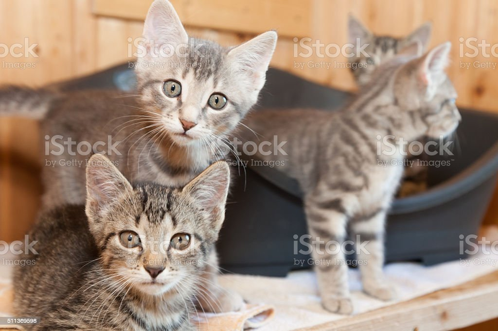 curious kitten group stock photo