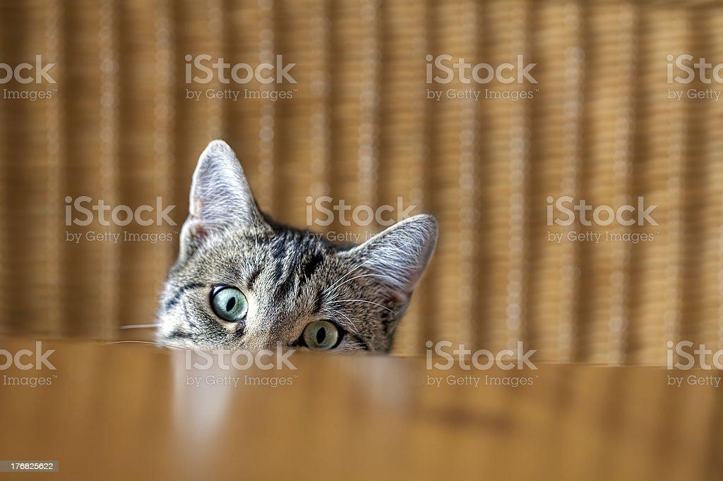 Curious kitten stock photo