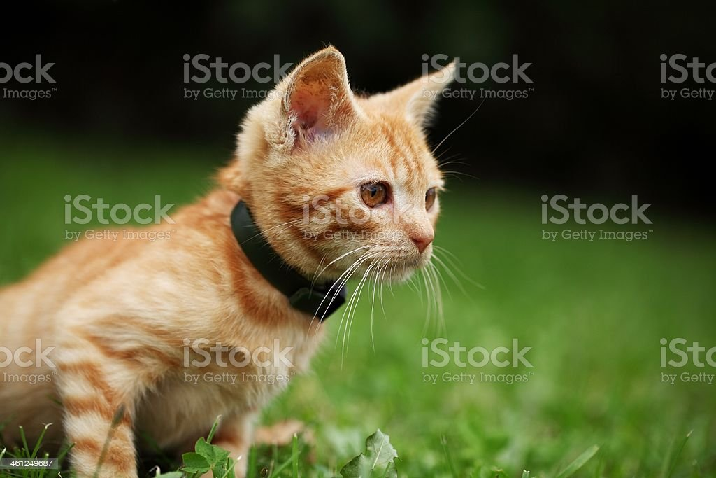 Curious kitten royalty-free stock photo