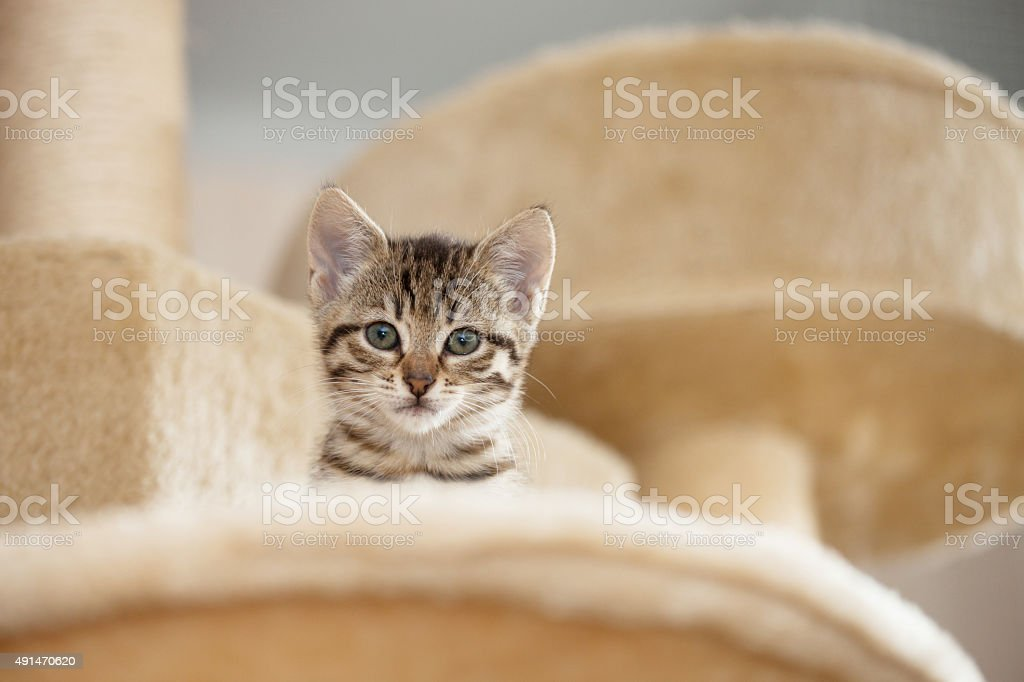 curious kitten stock photo