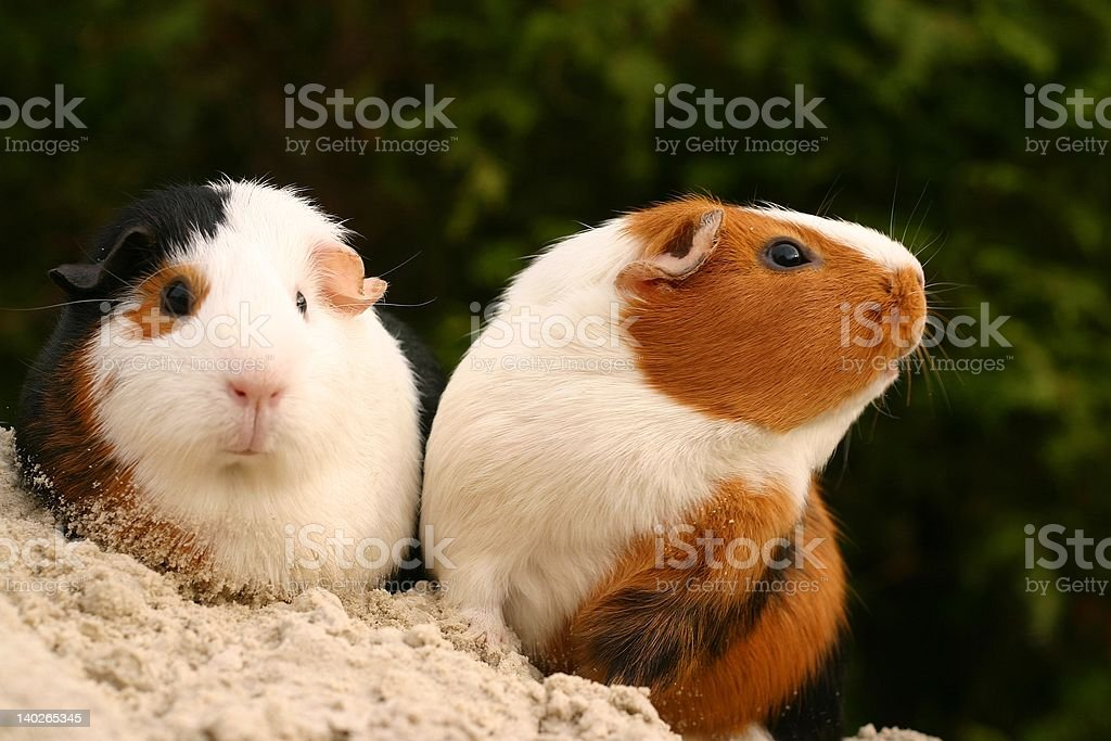 Curious pets stock photo