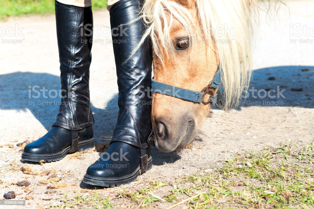 Curious pony smelling young girl equestrian boots. stock photo