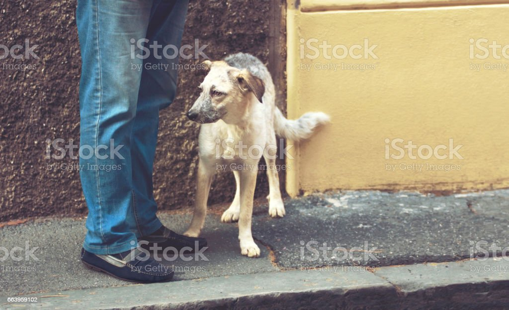 Curious puppy black and white half-blood dog standing near the man\'s...