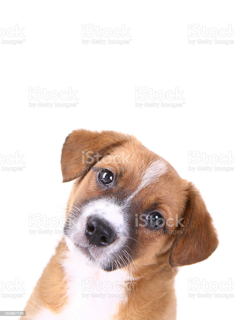 Curious Puppy Looking stock photo