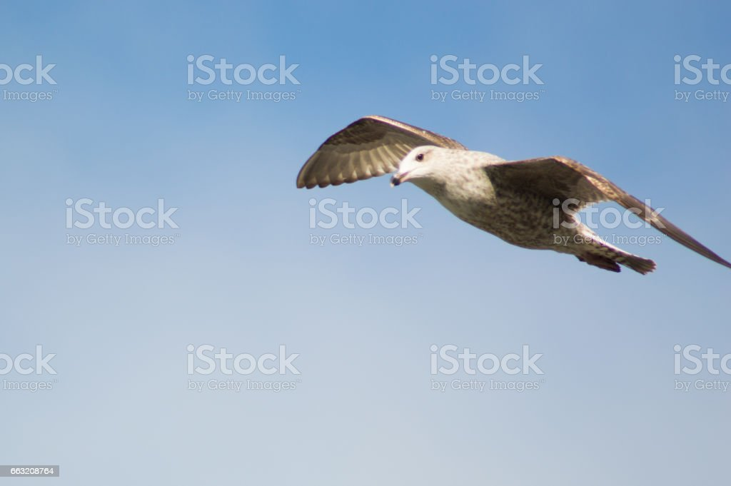 Curious seagull stock photo