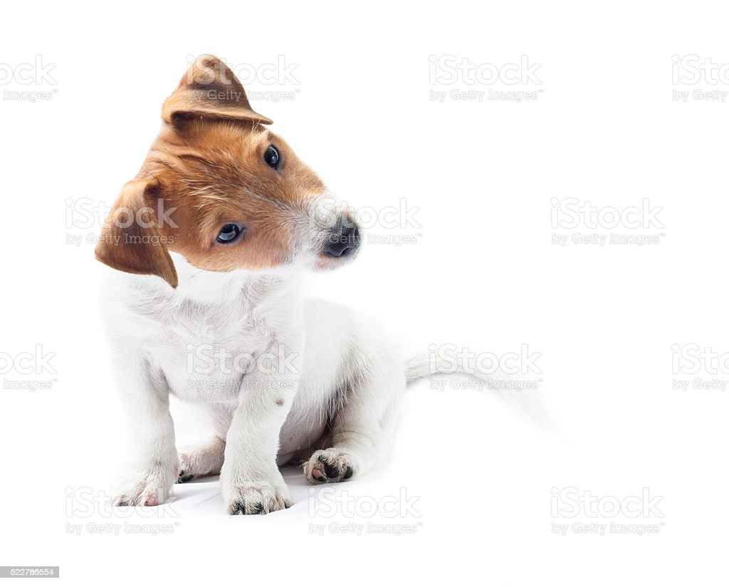 Curious sitting dog puppy tilt head funny stock photo