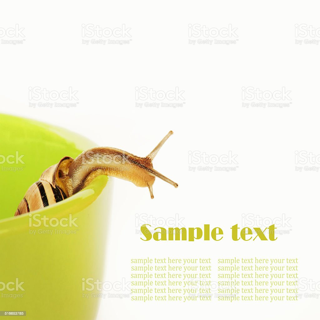Curious snail in the green cup. stock photo