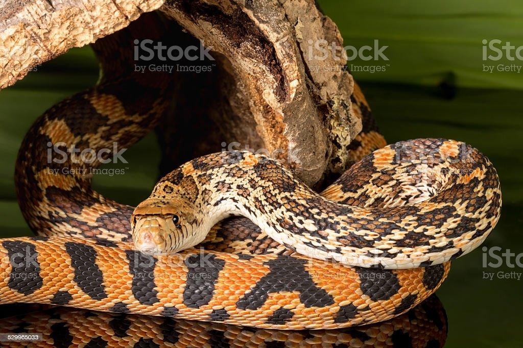 Curious snake stock photo