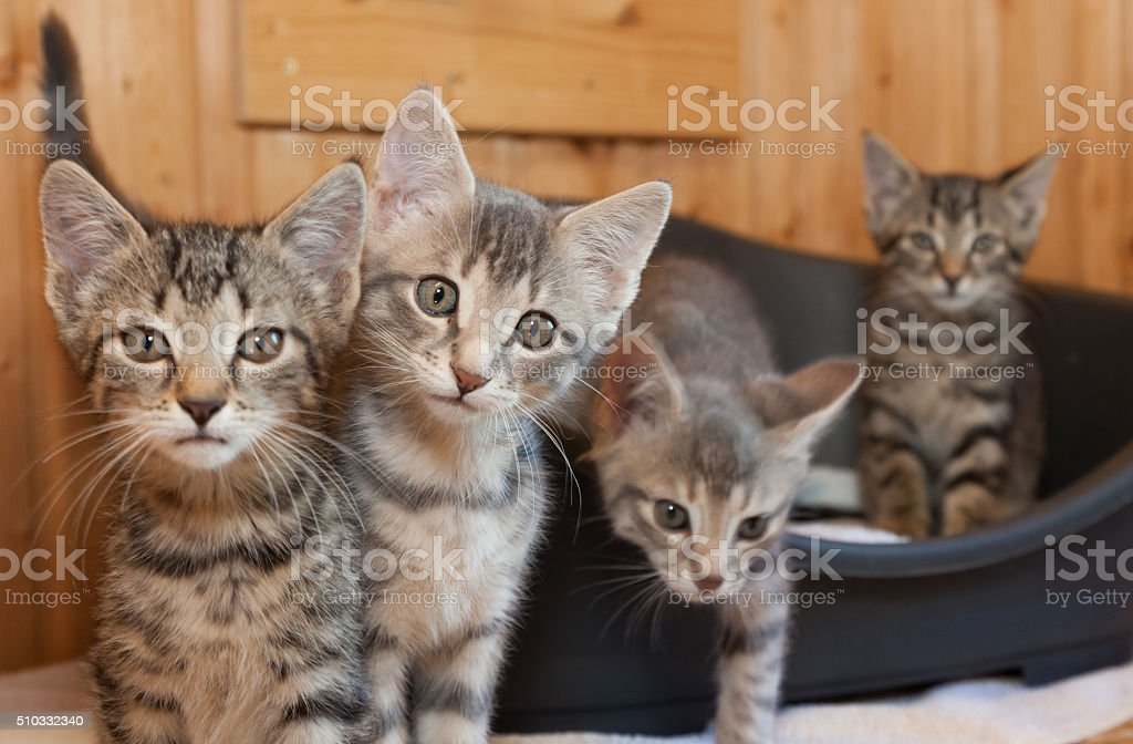 curious tabby cat group stock photo