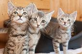 curious tabby cat group