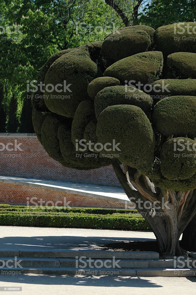 Curious tree stock photo