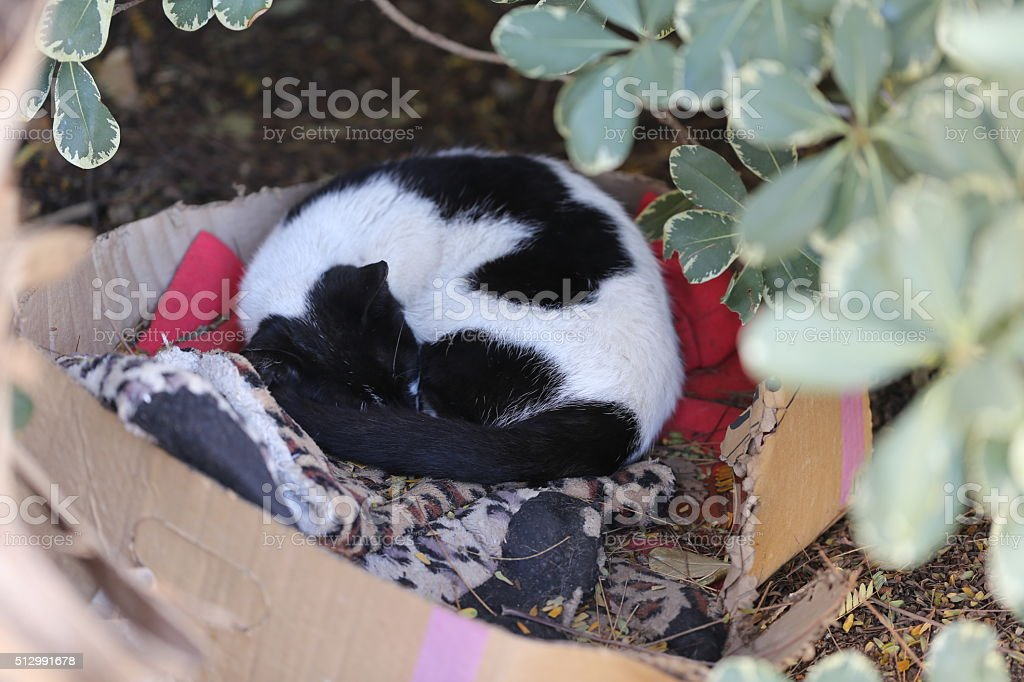 Curled Up Sleeping Cat stock photo
