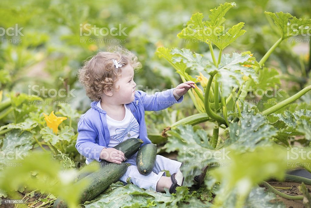 Curly baby girl in farm field next to zucchini plant stock photo