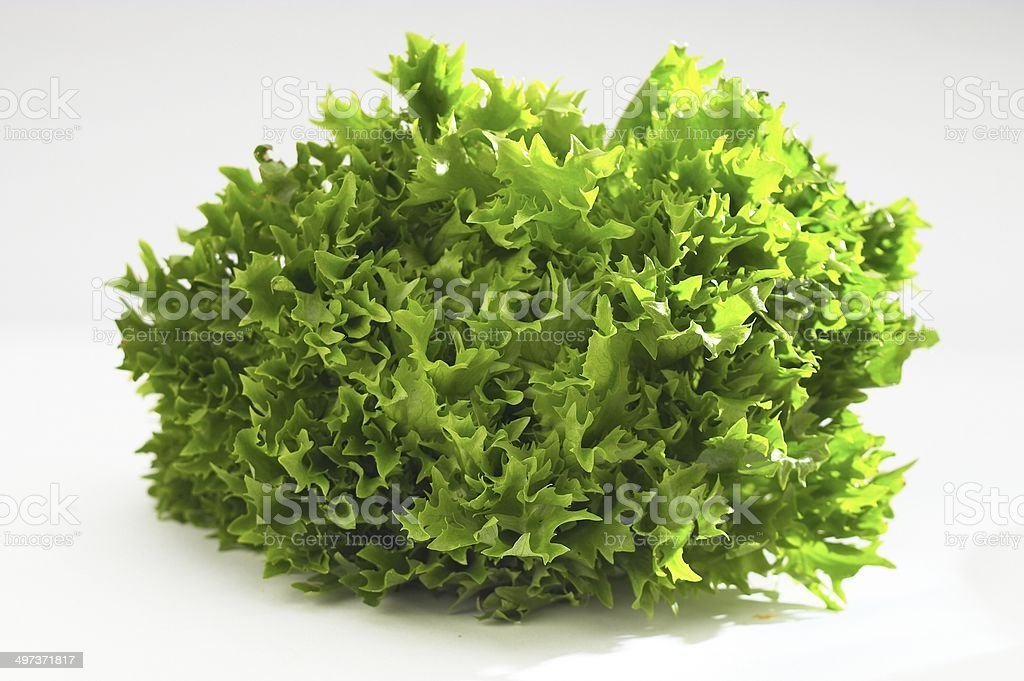 Curly Endive stock photo