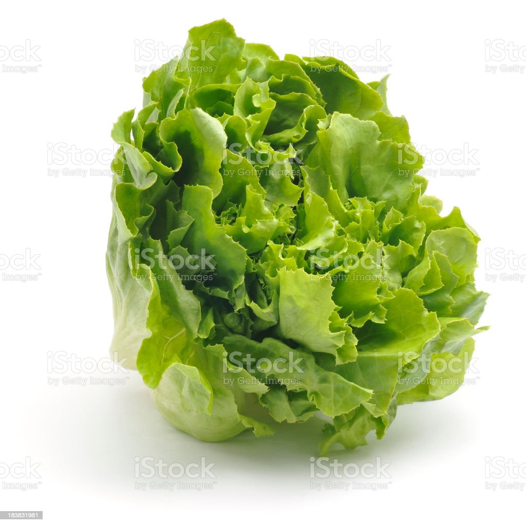 Curly Leaf Lettuce stock photo