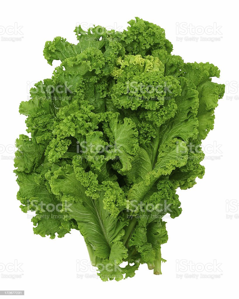 Curly leaf mustard greens stock photo
