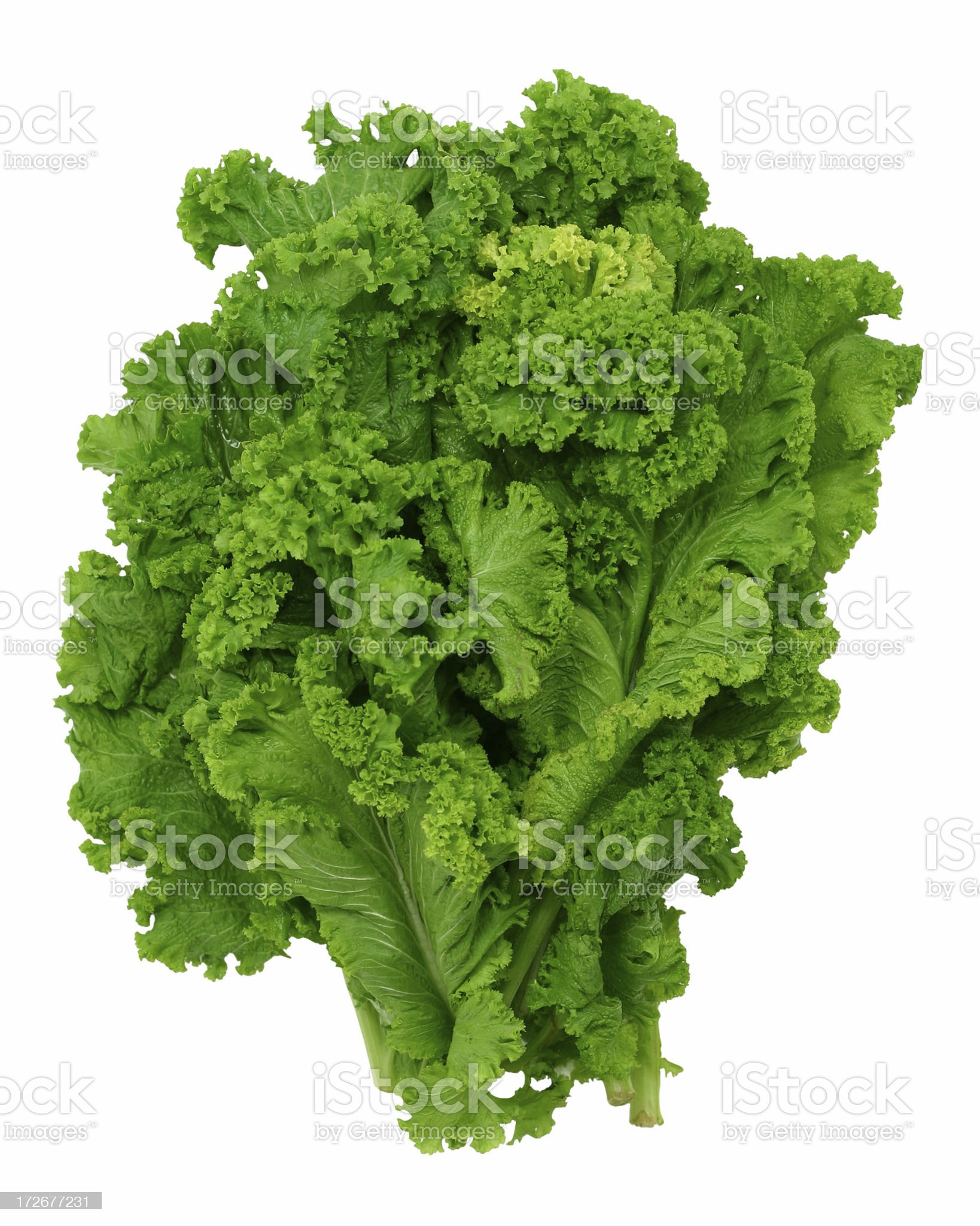 Curly leaf mustard greens royalty-free stock photo