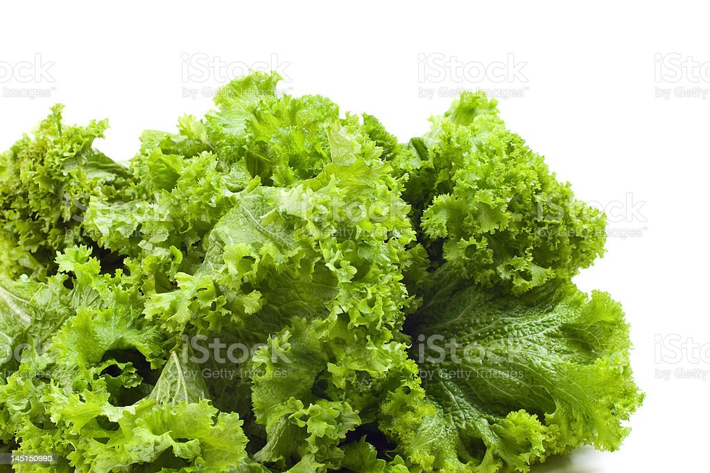 Curly Mustard Greens royalty-free stock photo