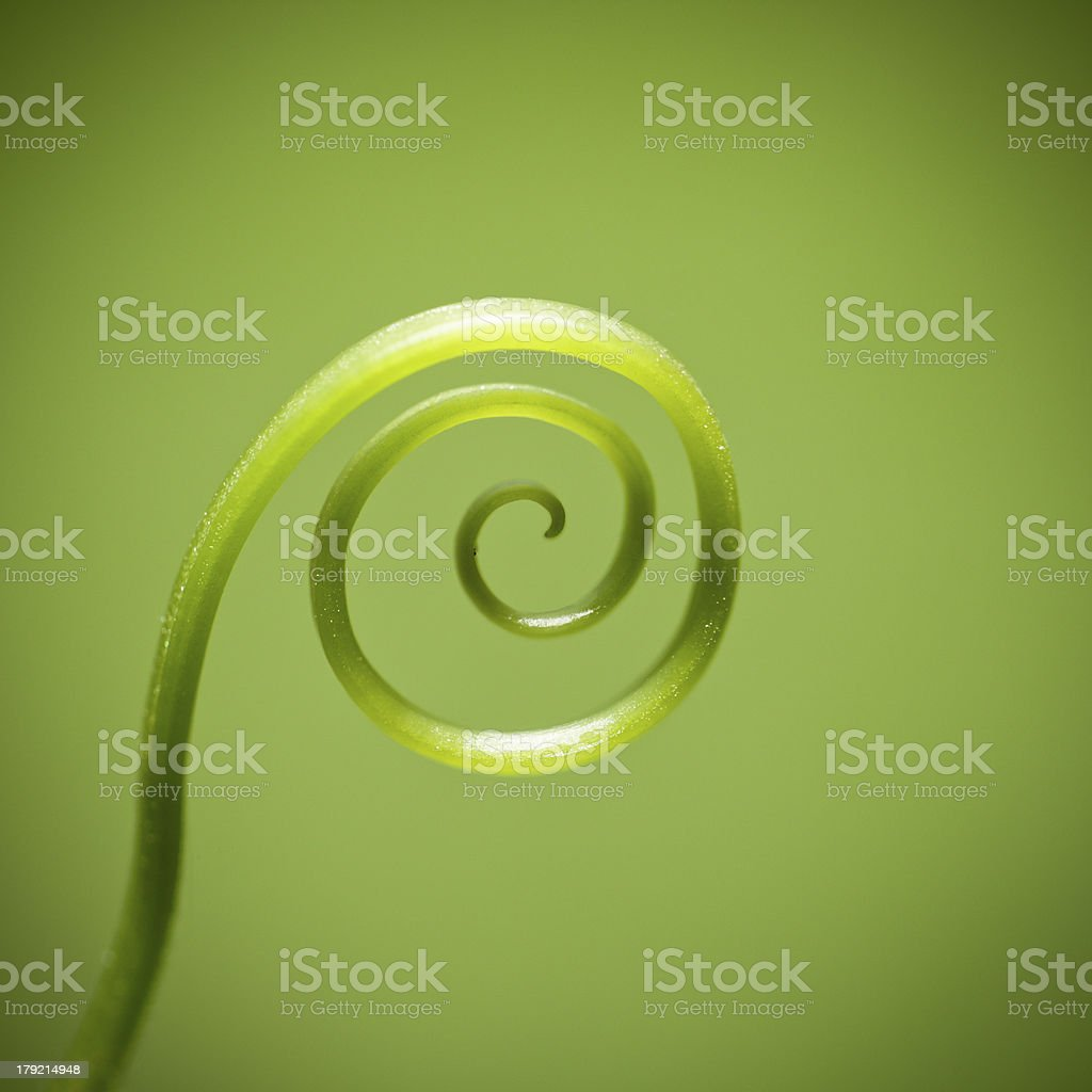 curly vine of plant royalty-free stock photo