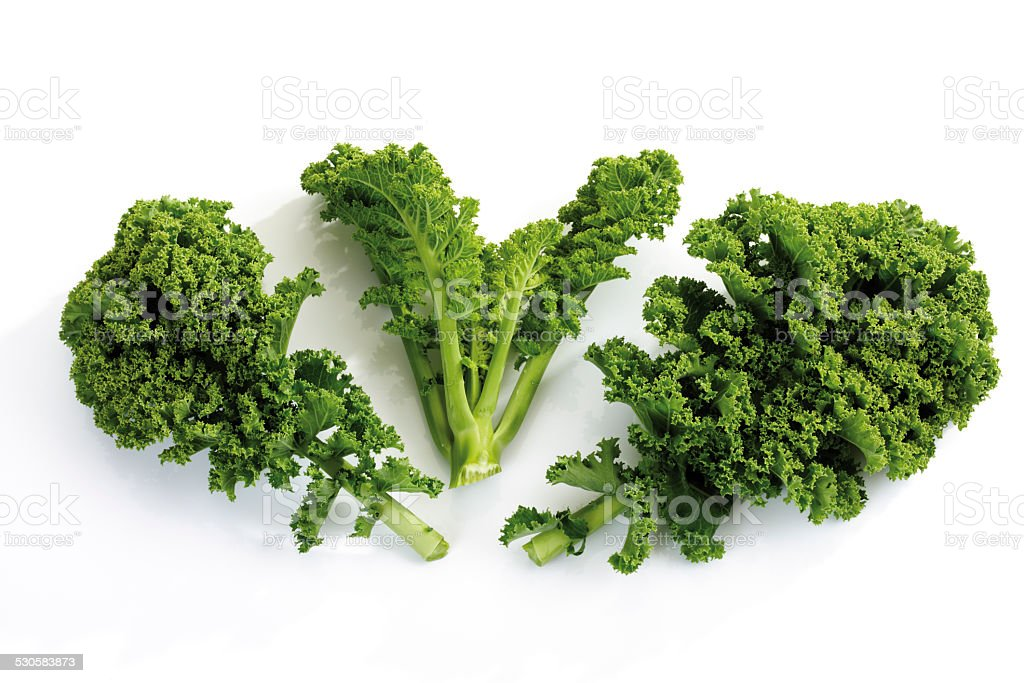 Curly-leaf kale stock photo