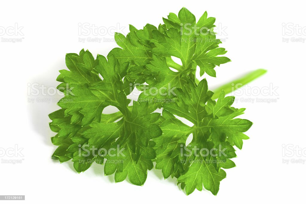 Curly-Leaf Parsley sprig royalty-free stock photo
