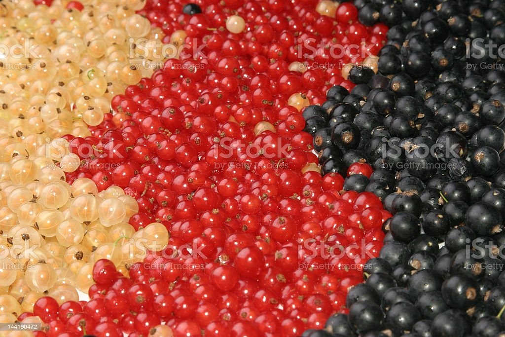 Currants, different colors royalty-free stock photo