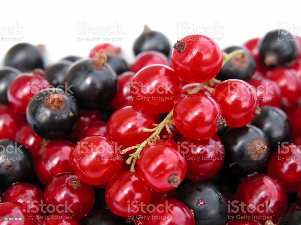 currants royalty-free stock photo