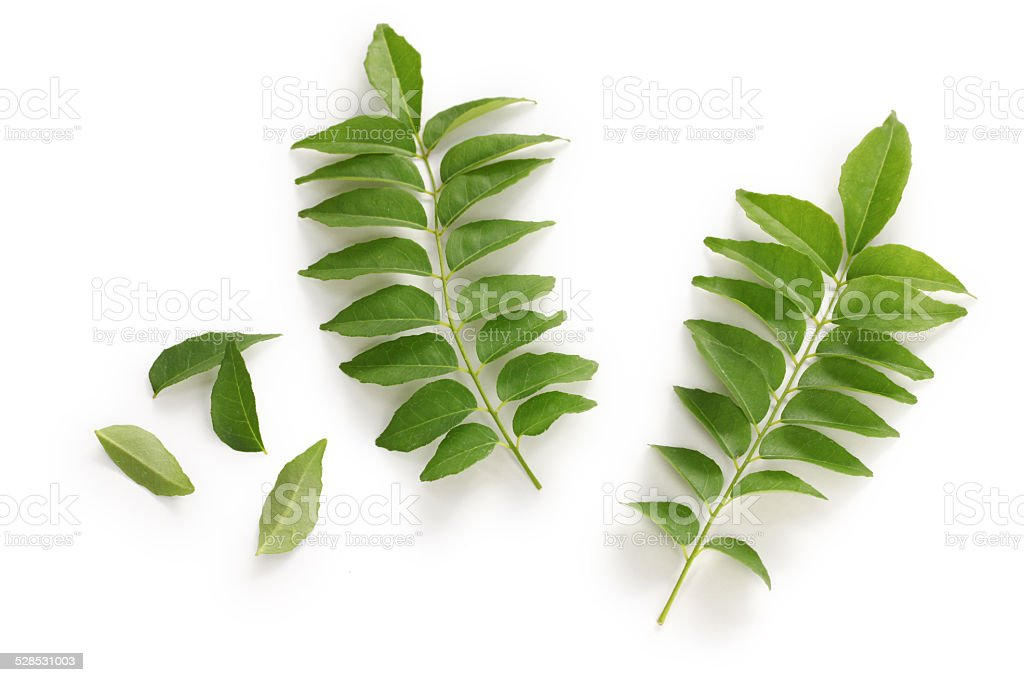 curry leaf, curry tree stock photo