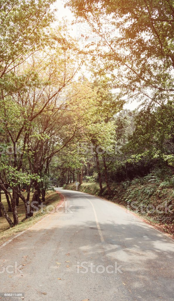 curve asphalt road with tree sideway in forest. stock photo
