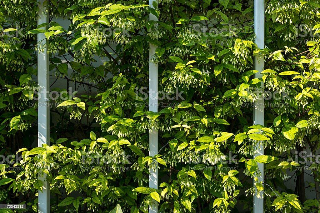Curve lignes de plantes et de vignes et de clôture de fer photo libre de droits