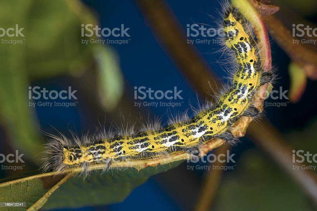 curve of caterpillar stock photo