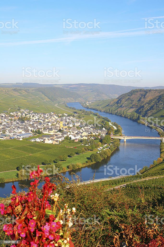 Curve of river Mosel with small village in vineyards stock photo