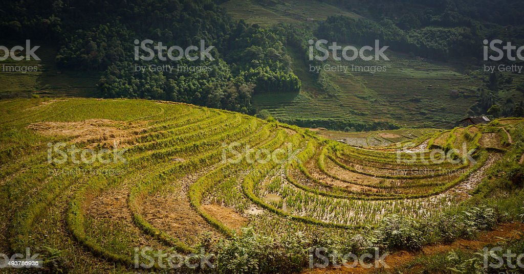 Curve on terrace field rice at Mu Cang Chai stock photo