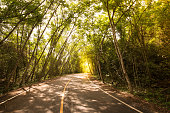 Curve road and rubber tree tunnel