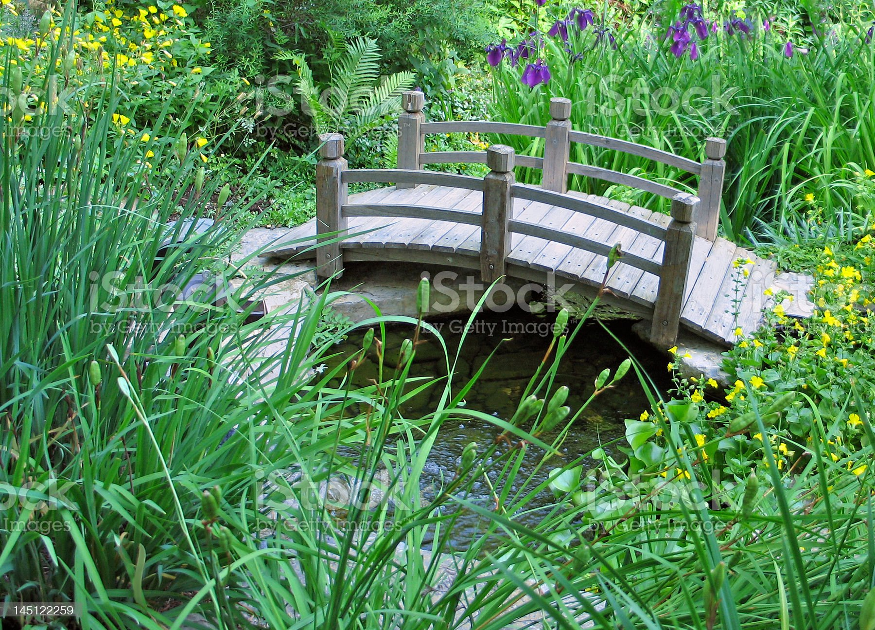 Curved bridge accents wetland garden royalty-free stock photo
