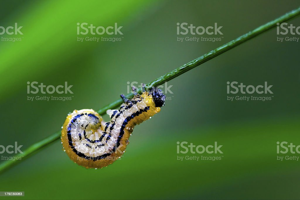 curved caterpillar royalty-free stock photo