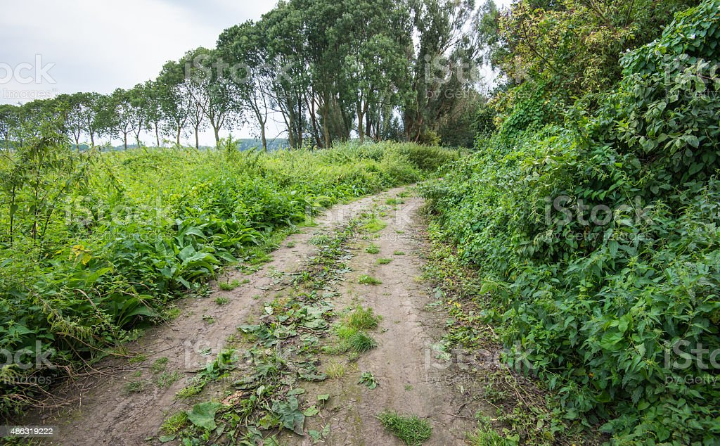 Curved dirt road partially overgrown with weeds stock photo
