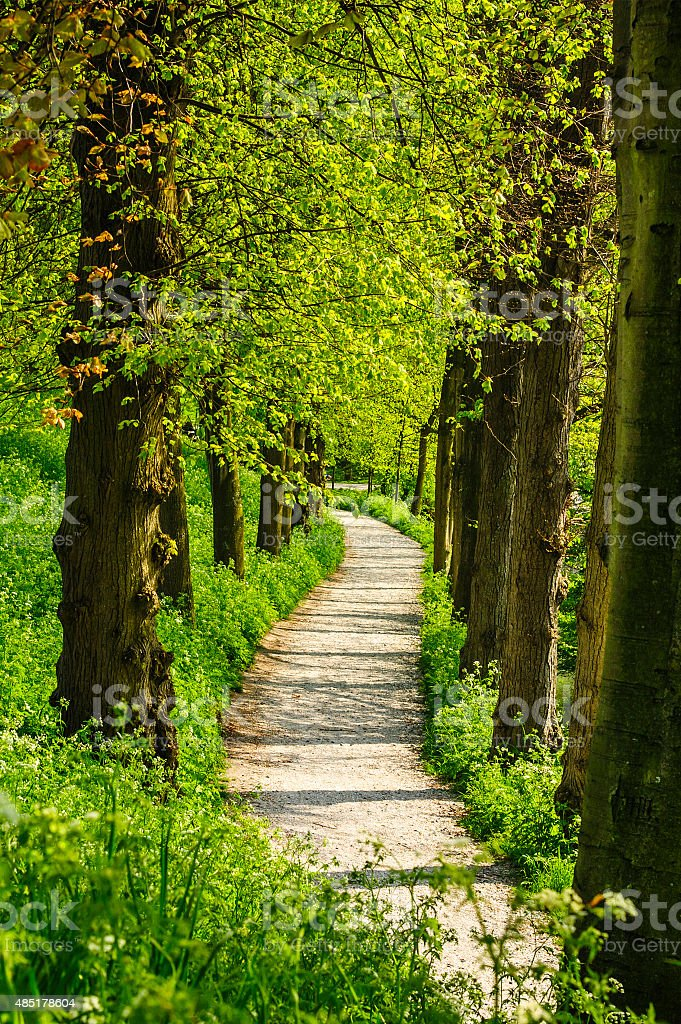 Curved footpath in a park stock photo