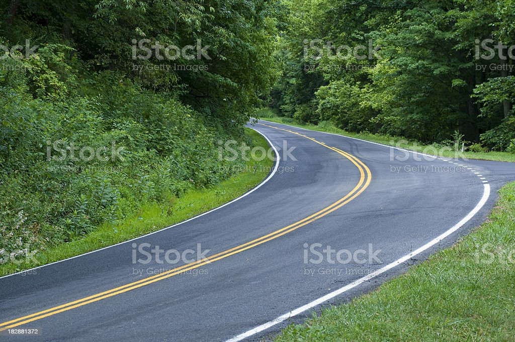 Curved Forest Road royalty-free stock photo