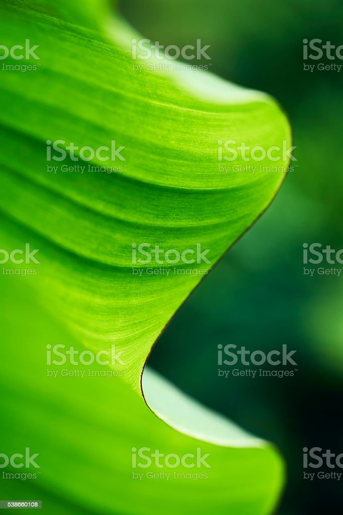 Curved palm leaf stock photo