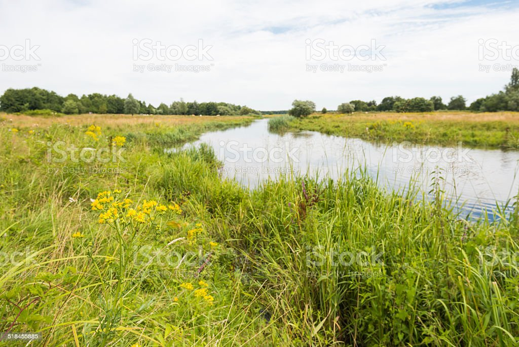 Curved river in the summer season stock photo